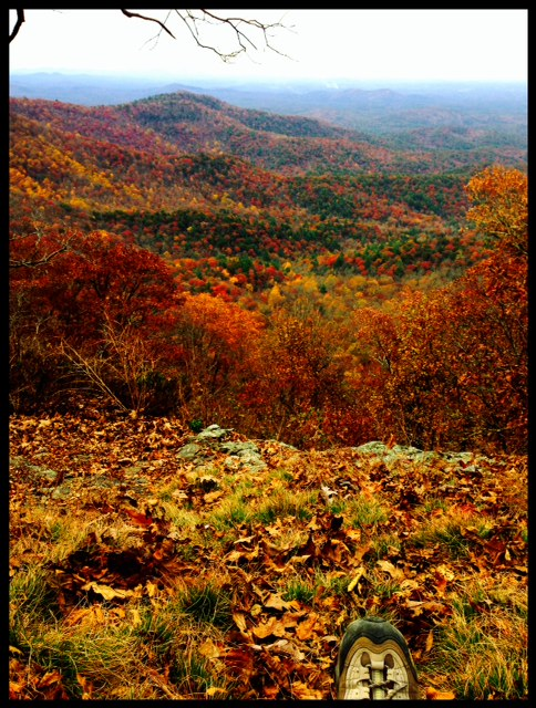 fall color along the appalachian trail