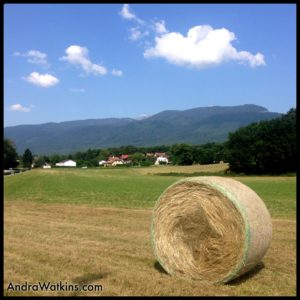 hay field Trelex Switzerland