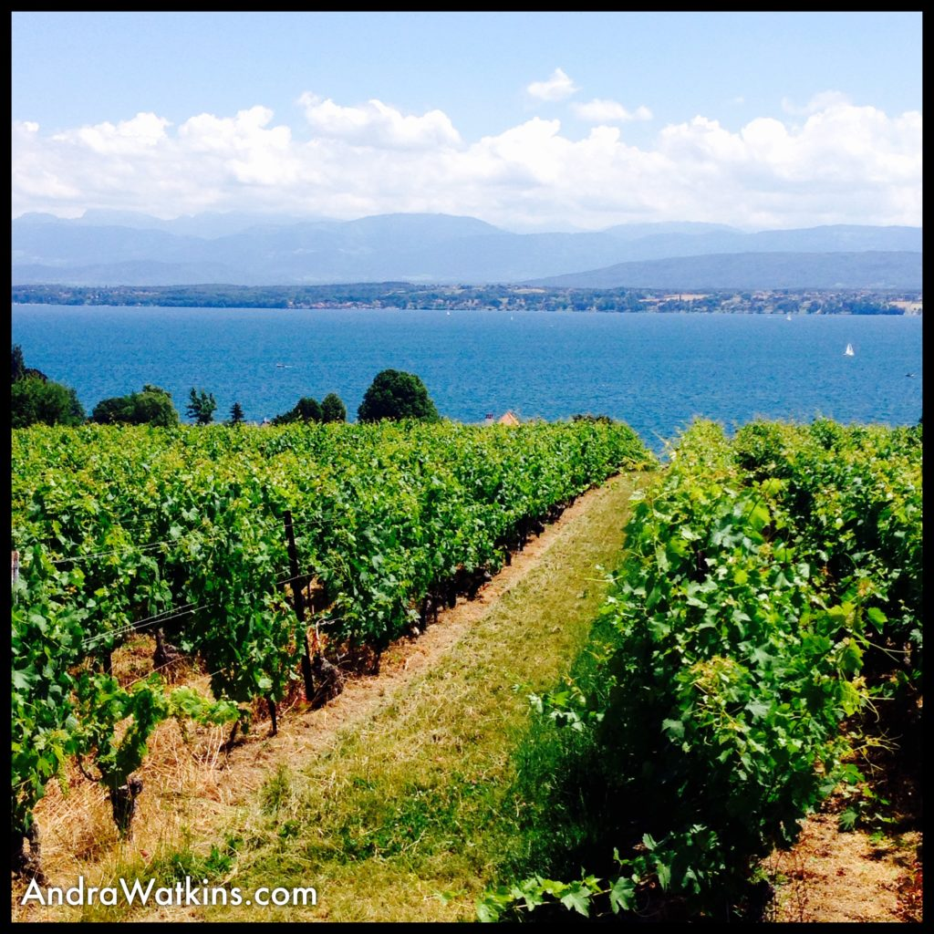 Vineyards abound in the Vaud region of Switzerland